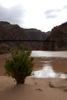 Boat Beach - Kaibab Bridge